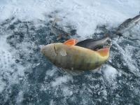 Рыбалка в Моголии. МОНГОЛЬСКИЙ ХАРИУЗ, ОКУНЬ