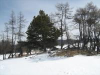 Озеро Кедровое
