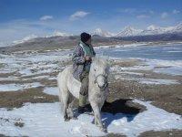 Мой конь Джамбо